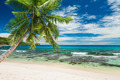 tropical beach with palm - PhotoDune Item for Sale