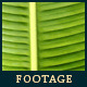 Green Leaf In Nature 6 - VideoHive Item for Sale