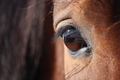 Brown horse eye close up - PhotoDune Item for Sale