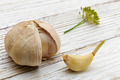Garlic on a white wooden board - PhotoDune Item for Sale