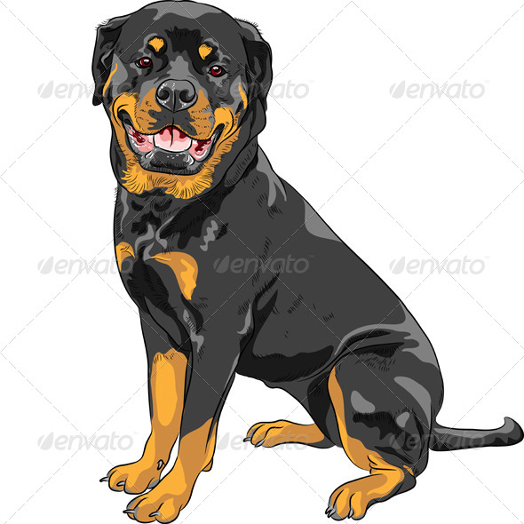 GraphicRiver Rottweiler Breed Dog 8370825