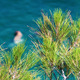 Swimming in the Sea and Trees - VideoHive Item for Sale