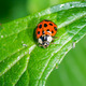 Ladybug - PhotoDune Item for Sale