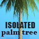 Isolated Palm Tree - GraphicRiver Item for Sale
