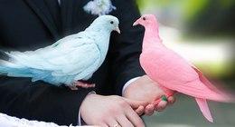 Animals Collection (Photos)