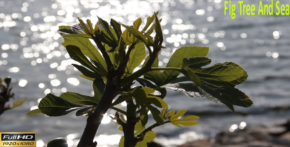 Fig Tree And Sea
