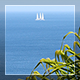 Palm, Sea And White Sail - VideoHive Item for Sale
