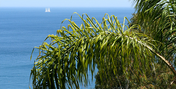 Palm Sea And White Sail