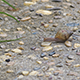 Snail Fast Walking - VideoHive Item for Sale