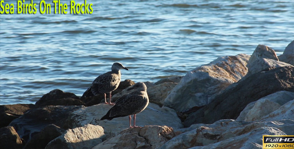 Sea Birds On The Rocks