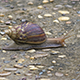 Snail Fast Walking 2 - VideoHive Item for Sale
