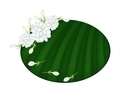 Fresh Jasmine Flowers on Green Banana Leaf - PhotoDune Item for Sale