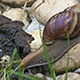 Big And Small Snail  - VideoHive Item for Sale