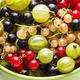 Currants and gooseberry - PhotoDune Item for Sale