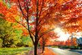 Leafy suburbs brilliant color - PhotoDune Item for Sale