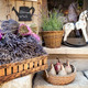 Lavender for Sale in Provence France - PhotoDune Item for Sale