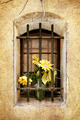Grunge Old Barred Window with Flowers - PhotoDune Item for Sale