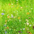 wild flowers - PhotoDune Item for Sale