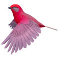 Songbird Tanager  - PhotoDune Item for Sale