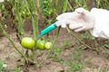 Genetically Modified Vegetable - PhotoDune Item for Sale
