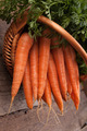 fresh carrots in wicker basket bunch on grungy wooden background - PhotoDune Item for Sale