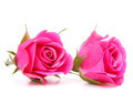 Pink rose flower bouquet isolated on white background cutout - PhotoDune Item for Sale