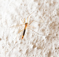mosquito. macro - PhotoDune Item for Sale