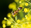 ant in nature. macro - PhotoDune Item for Sale