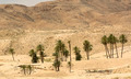 an oasis of palm trees and plants in the Atlas Mountains - PhotoDune Item for Sale