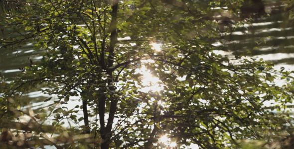 Forest River 3
