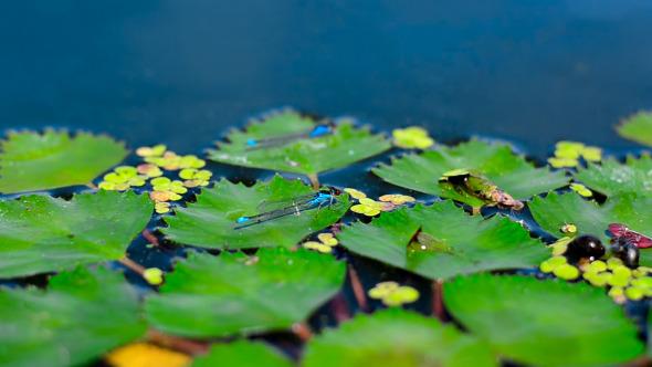 Dragonfly On Algae