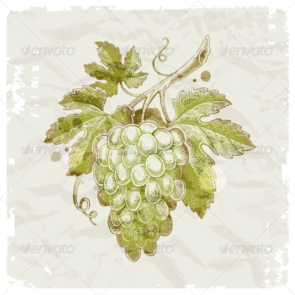 GraphicRiver Hand Drawn Grapes 8422435