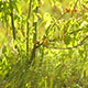 Green Grass And Bush - VideoHive Item for Sale