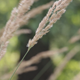 Dry Grass - VideoHive Item for Sale