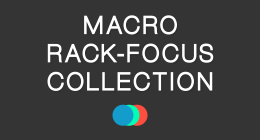 Macro Focus