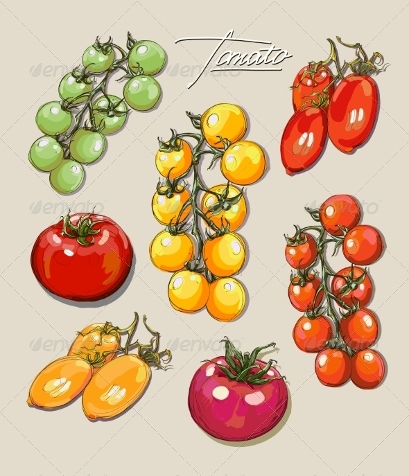 GraphicRiver Tomatoes Illustrations 8429430