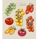 Tomatoes Illustrations  - GraphicRiver Item for Sale