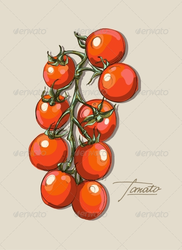GraphicRiver Tomato Illustration 8429449