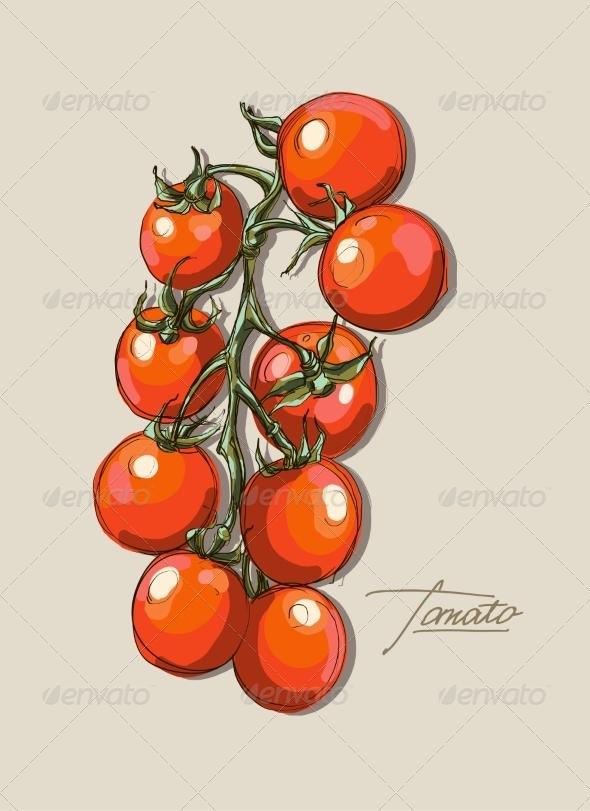 GraphicRiver Tomato Illustration 8429449