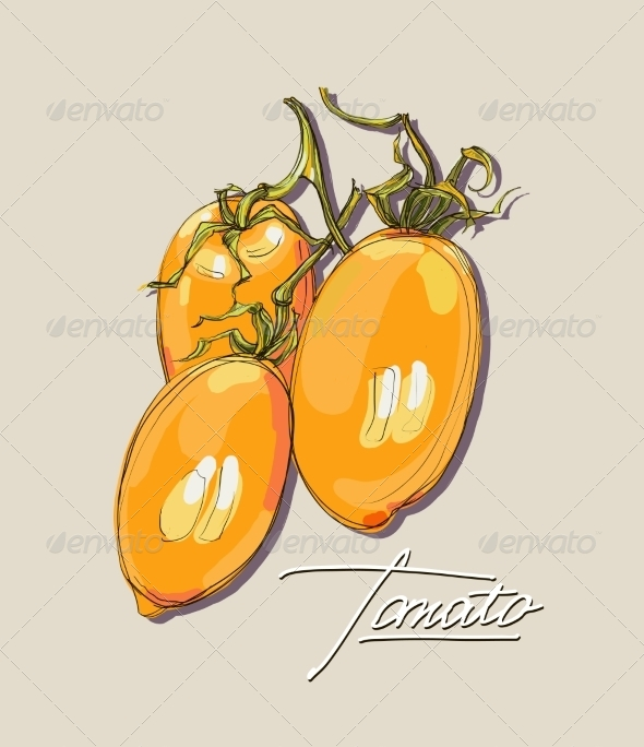 GraphicRiver Tomato Illustration 8429453