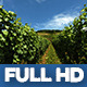 Moselle Valley Wineyard 2 - VideoHive Item for Sale