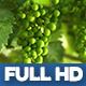 Moselle Valley Wineyard 3 - VideoHive Item for Sale