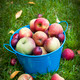Apple harvest - PhotoDune Item for Sale