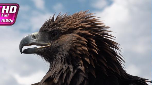 Golden Eagle on Sky Background