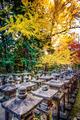 Fall Foliage in Nara, Japan - PhotoDune Item for Sale