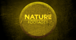 Nature Footages