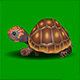 Turtle Walk  - ActiveDen Item for Sale