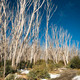 Snow Trees - PhotoDune Item for Sale