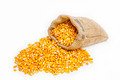 Corn kernels spilled on the ground with a filled sack of kernels - PhotoDune Item for Sale