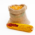 Bag of corn kernels and a corn ear - PhotoDune Item for Sale